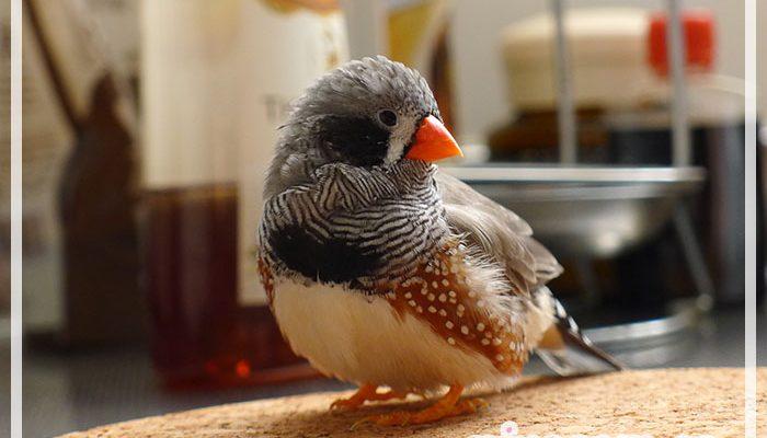 鳥に嫌われる人